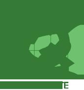 quadra verde